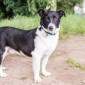Sandro_Border_Collie_Mix_Hund_Tierheim_Cappel_Marburg (3)