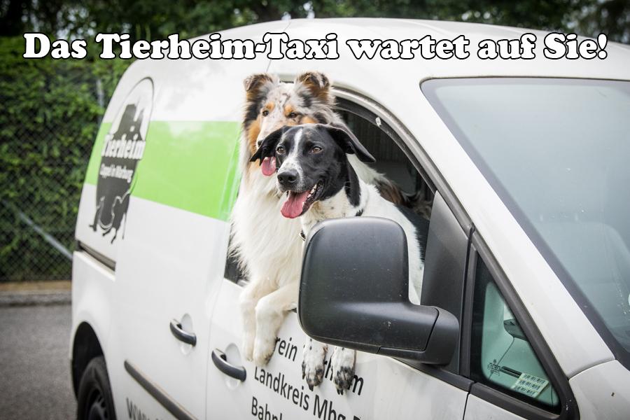 Tierheim-Taxi, Foto Hemlep