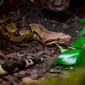 Snake_Schlange_Boa_constrictor_Tierheim_Cappel_Marburg (1)