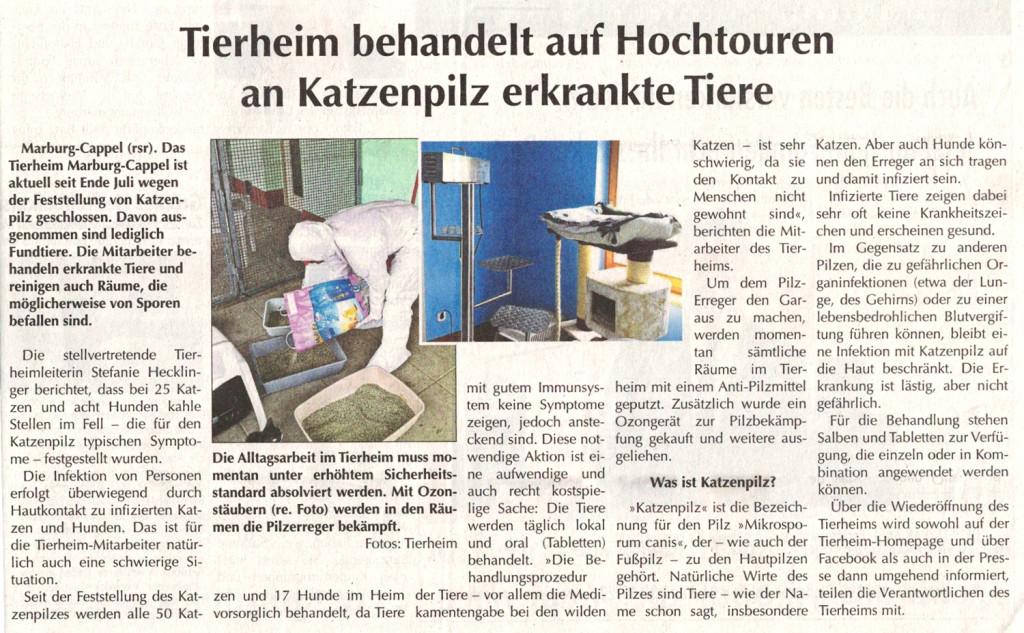 SoMo 14.8.16, Tierheim aktuell zum Katzenpilz