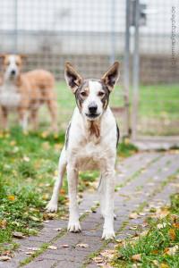hund_mischling_tierheim_cappe_marburg-2